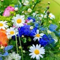 Prodejce Květinka